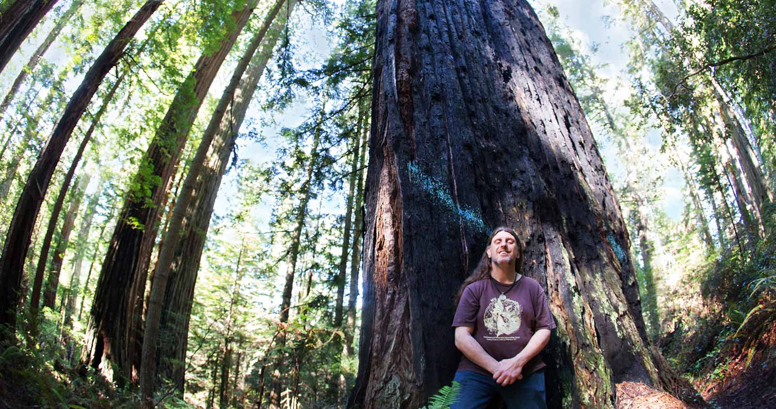 Environmental activist Rob DiPerna stands in front of a 1,000-year-old redwood in the Headwaters Forest Reserve. The blue paint once marked it for the sawmill. (Photo: Mary Grace McKernan)