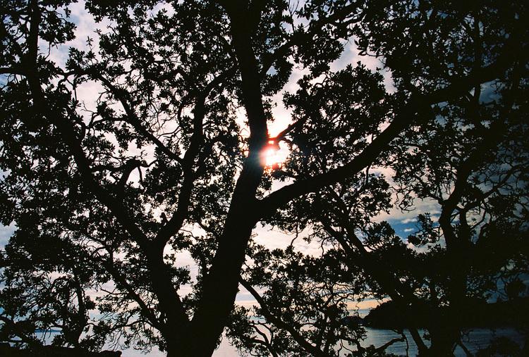 Tree+of+Life.jpg
