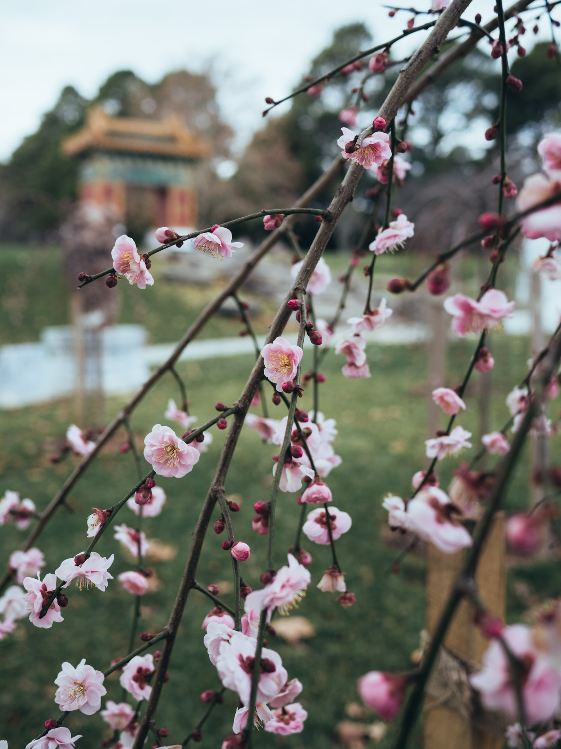 Chinese garden, Canberra ACT