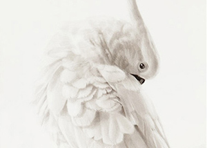 Gordon Hanley Cockatoo detail.jpg