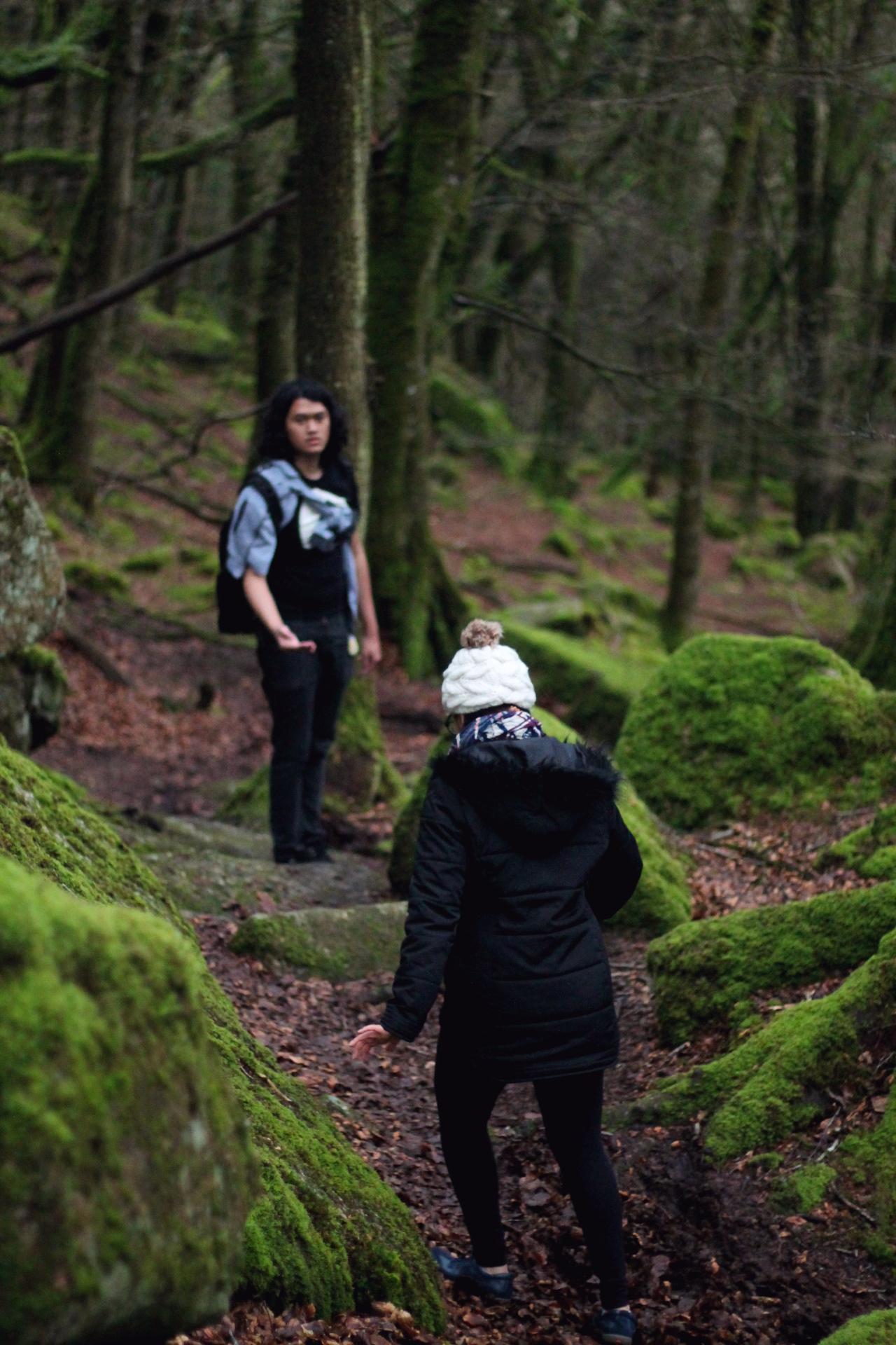 2. Walk through the woods.jpg