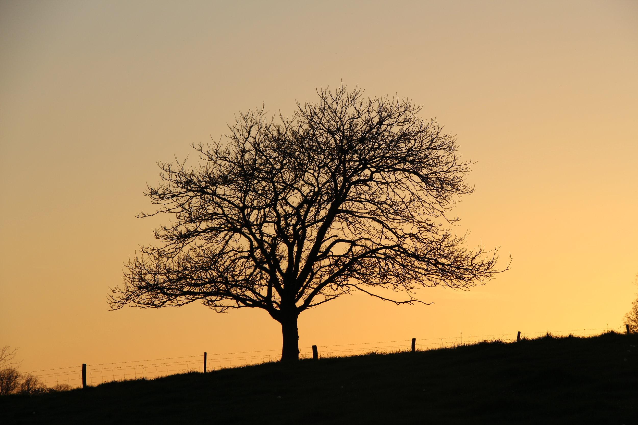 Saltrum Sunset.JPG