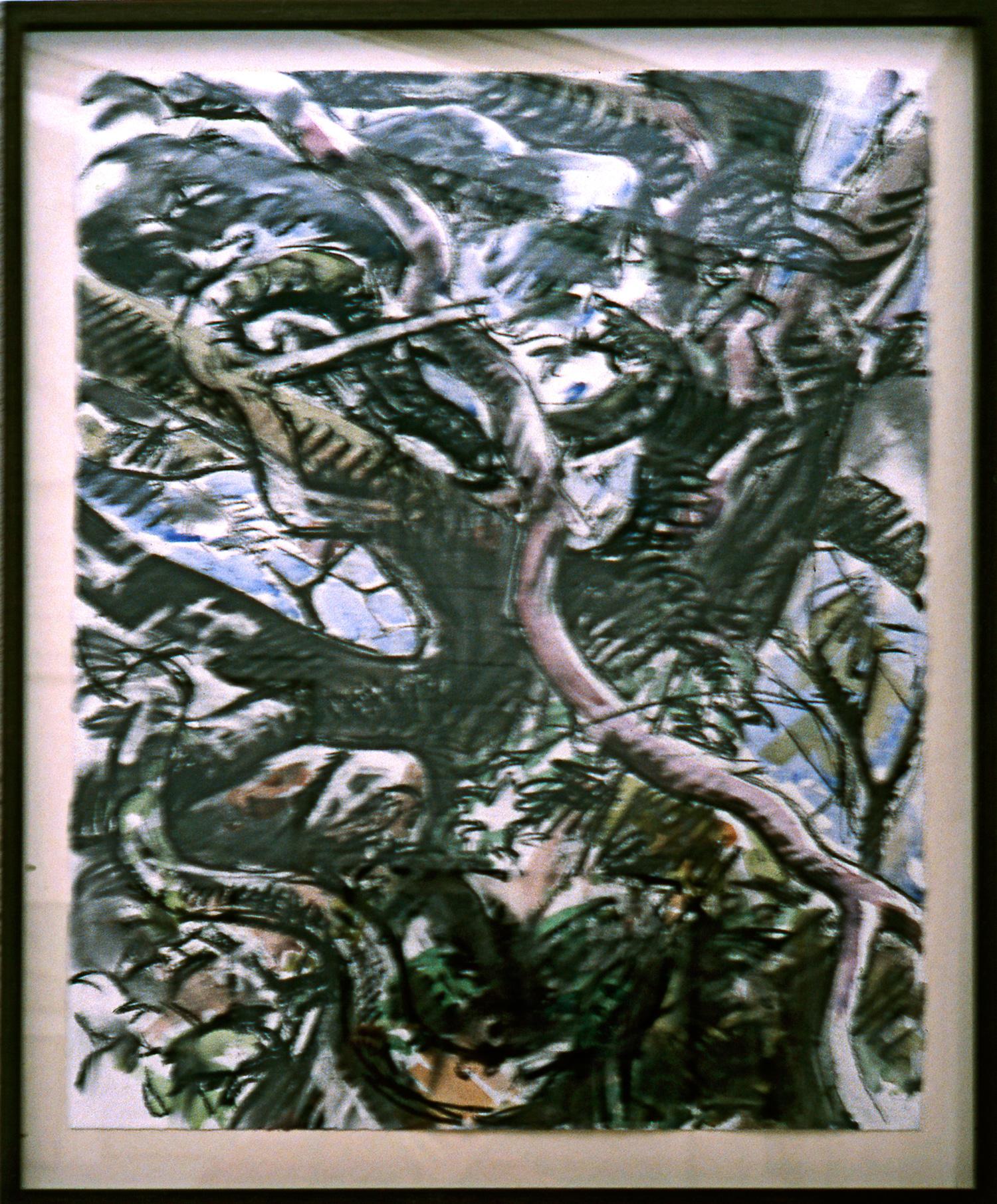 DEAD OAK Charcoal & watercolour,  86cm x 66cm
