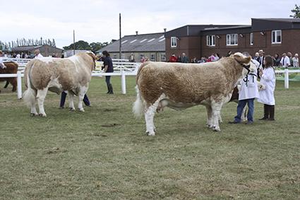 Great Yorskhire 2010 051.jpg