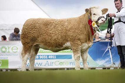 Royal Ulster Ballinalare Farm Empress.jpg
