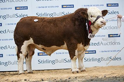 Sterling Oct, Kilbride Farm Duke.jpg