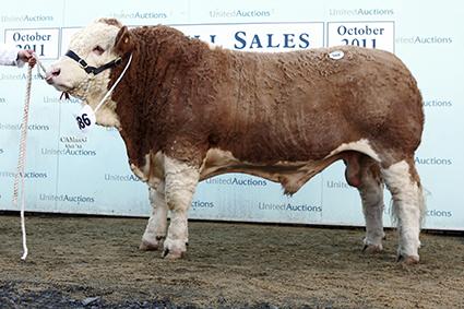 586 Kilbride Farm Buster.jpg