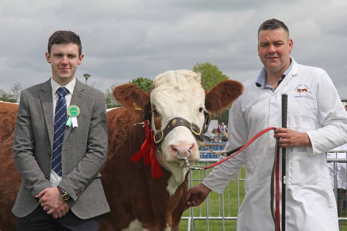 Simmental judge Andrew Clarke, Tynan, congratulates Keith Nelson, Rosslea, who exhibited the reserve female champion Scribby Farms Exquisiter.