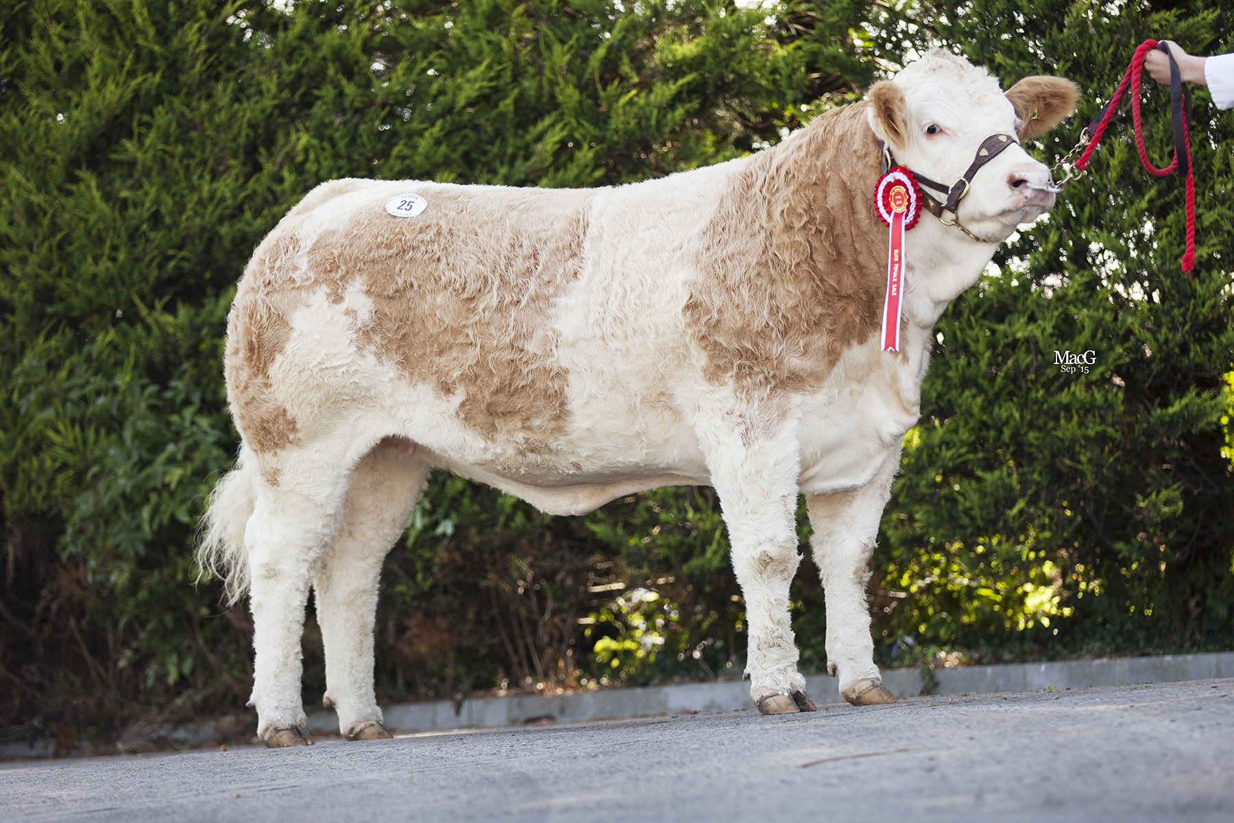 The first prize winning Derrycallaghan Fancy Me sold at 4600gns.