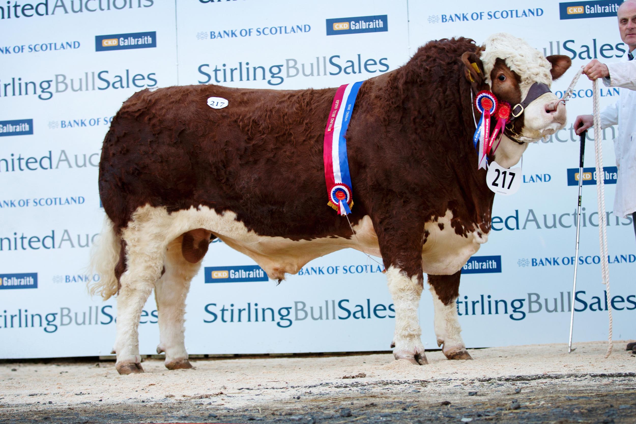 217-Kilbride-Farm-Foreman-22,000gns-4813.jpg