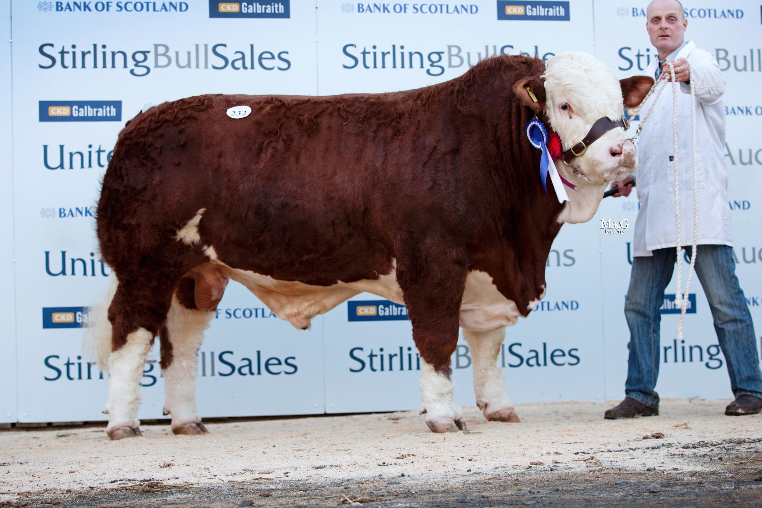 232-Kilbride-Farm-Fearless-15,000gns-4839.jpg