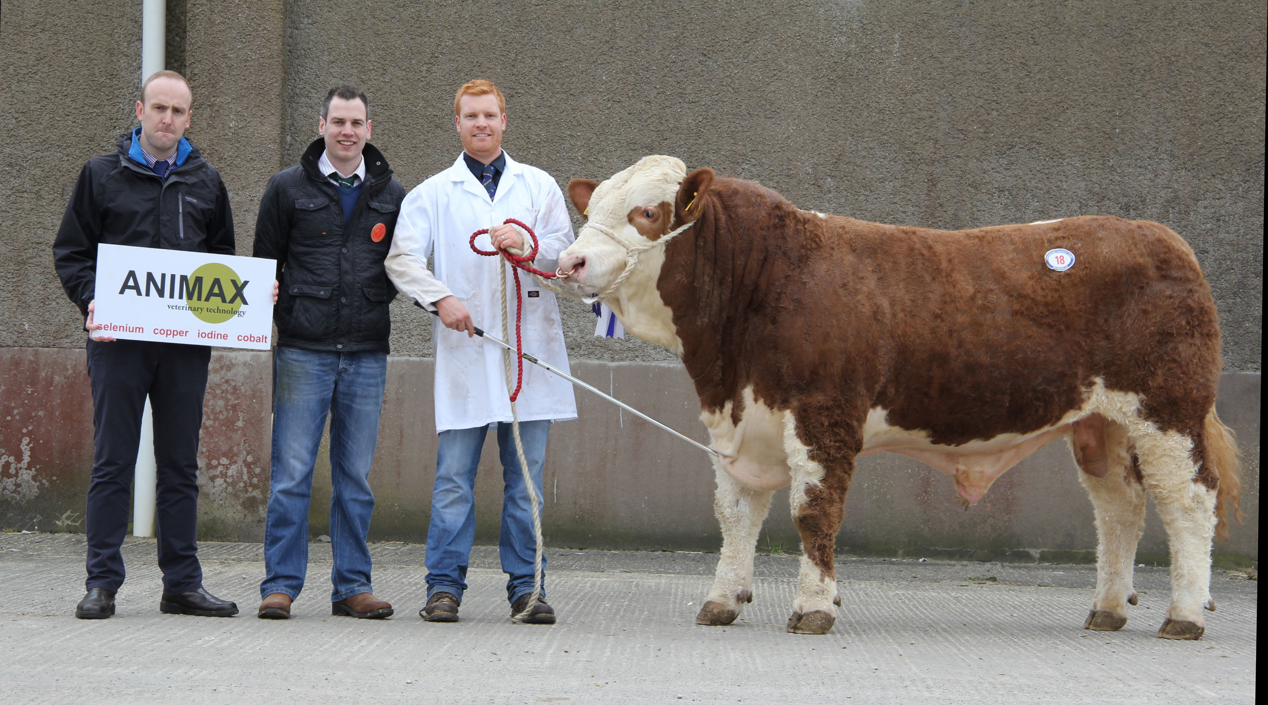 Reserve male champion Lisglass Fortress sold at 3,400gns for Christopher Weatherup, Ballyclare. Included are sponsor Neill Acheson, Animax; and judge Shane McDonald, Tempo.
