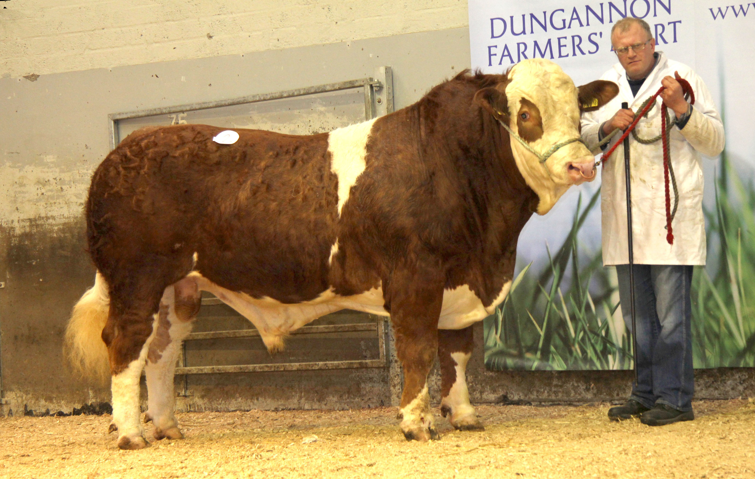 David Farrell, Lisbellaw, realised 4,600gns for the unshown Lakeside Fred.