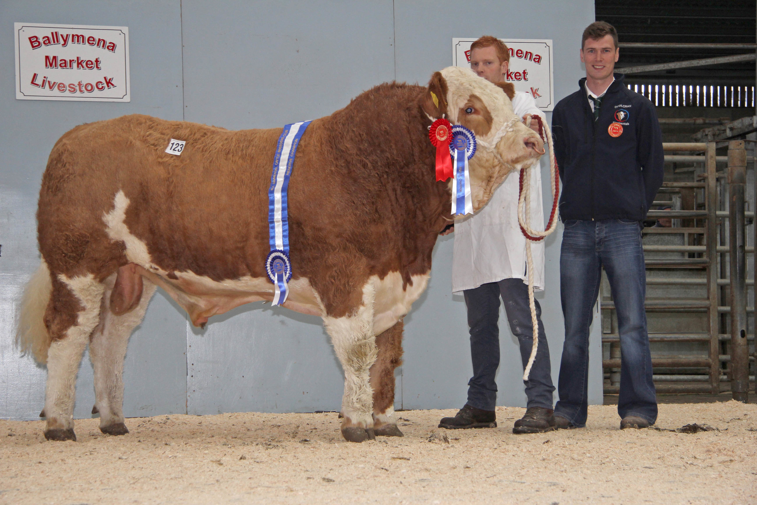 Reserve male and reserve supreme champion was Lisglass Geraldo sold for 2,400gns. Christopher Weatherup is pictured with judge Paul McDonald.