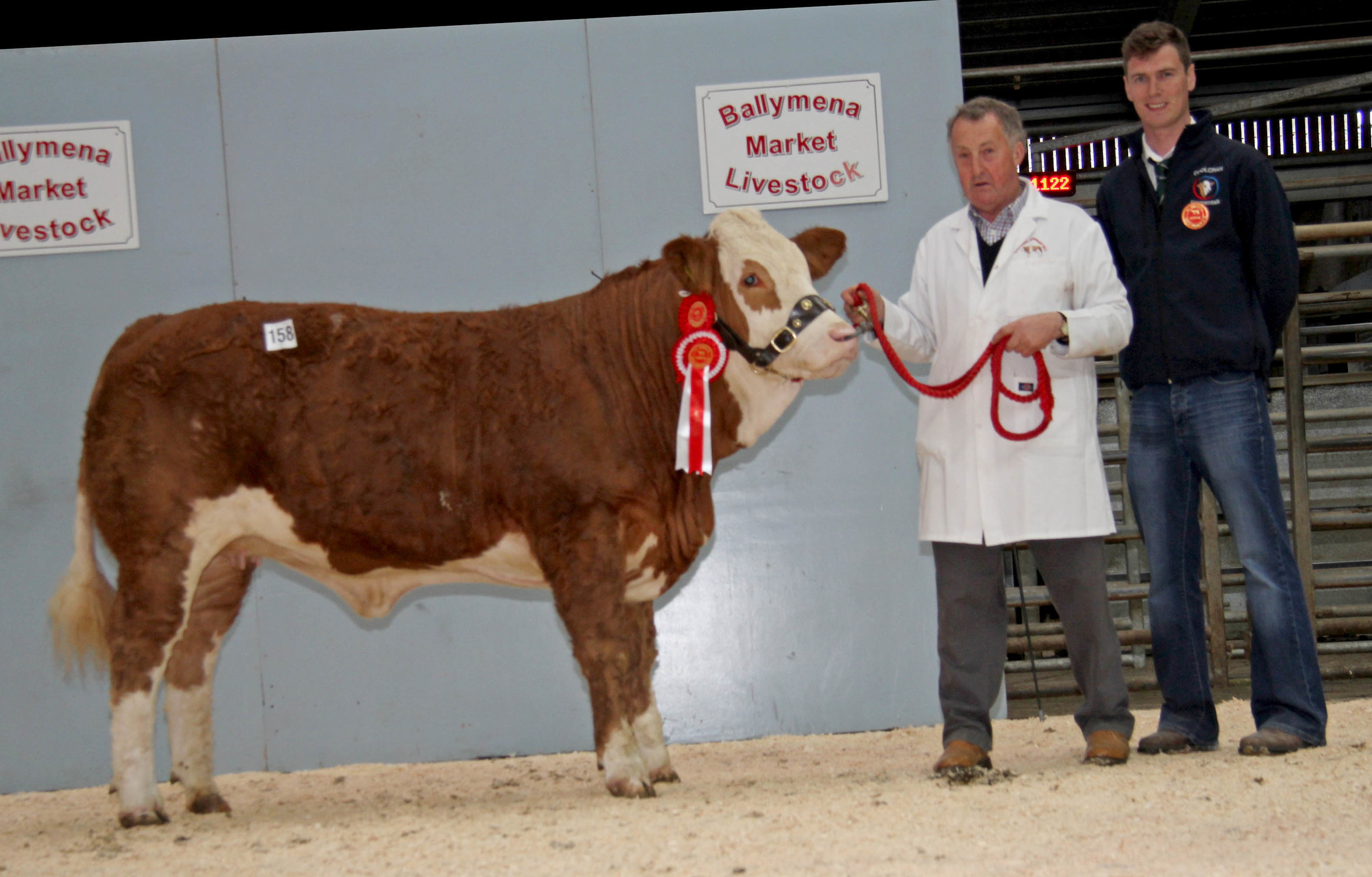 Female Champion was Cleenagh Gem sold for 2,700gns by Adrian Richardson, Maguiresbridge. Included is judge Paul McDonald, Tempo.