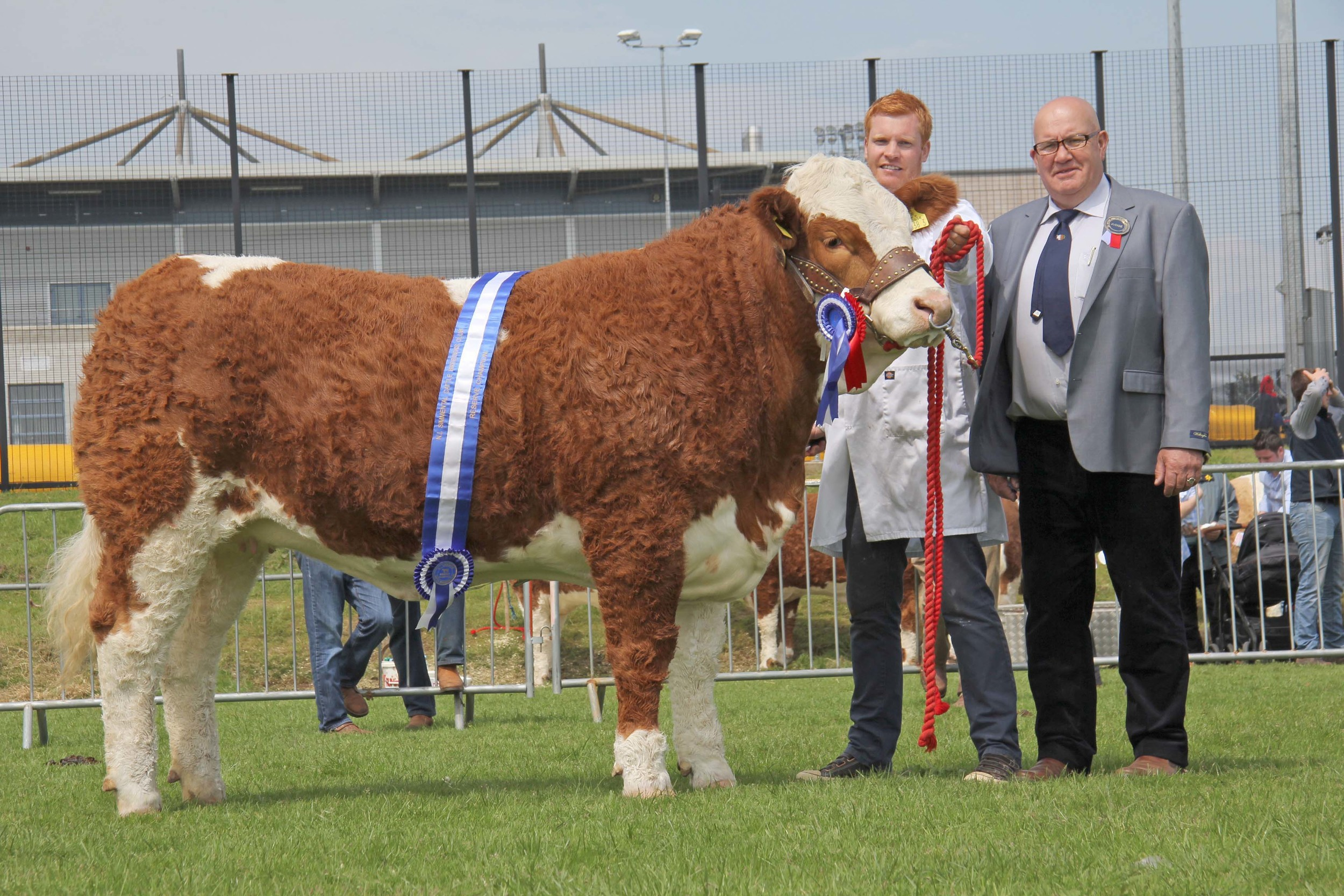 Reserve female and reserve supreme champion Lisglass Fabulous shown by Christopher Weatherup, Ballyclare. Included is Co Cork judge Tony O'Leary.