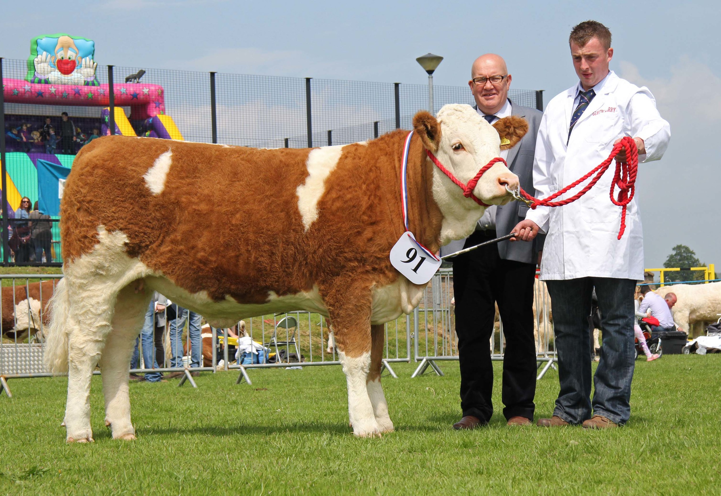 First-time exhibitor Aaron Smyth, Maghera, with his fourth placed heifer Newbiemains Goldstar at Ballymena Show. Included is judge Tony O'Leary.