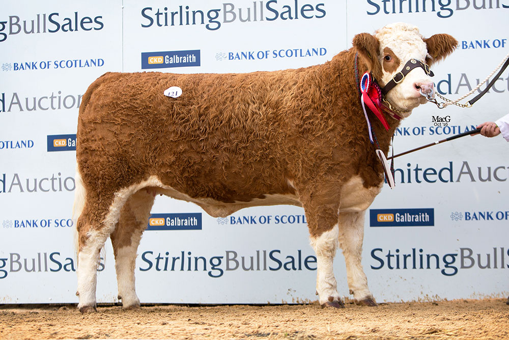 421-Cairnview-Modesty-6th-2800gns-8698.jpg