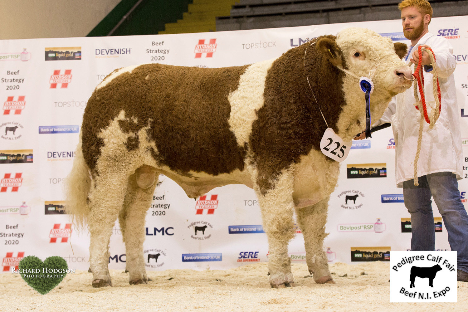 Reserve senior Simmental champion was Lisglass Gallant bred by Leslie and Chris Weatherup, Ballyclare.