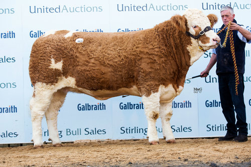 Sterling Bacardi's Hawaii secured the Female Breed Record - selling at 28,000gns at the Sterling Dispersal sale October 2017