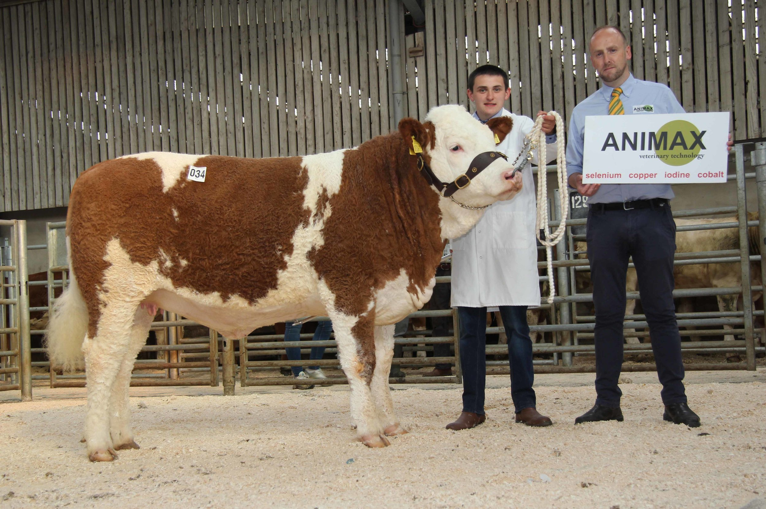 Reserve female champion was Jason Whitcroft's Whitdrum Lady Delilah. Included is sponsor Neill Acheson, Animax.