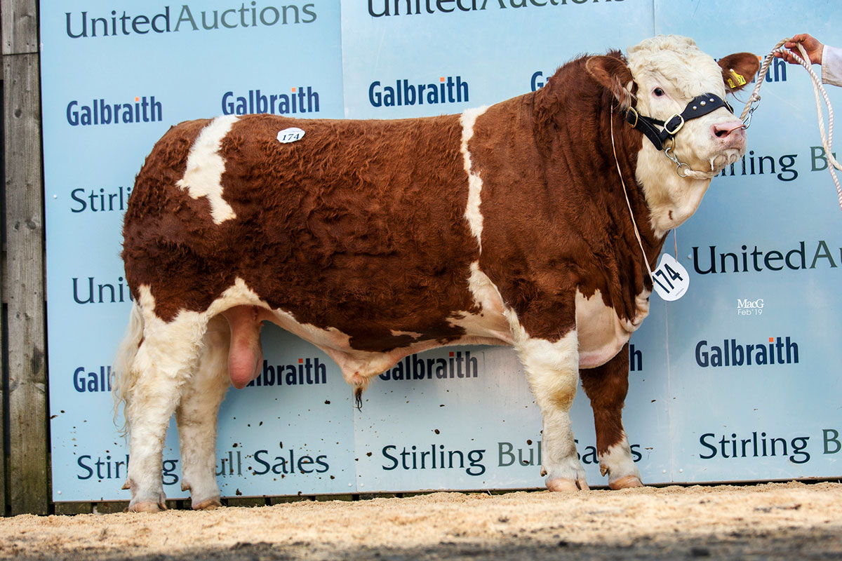 174-Blackford-Island-Warrior-11,000gns-6549.jpg