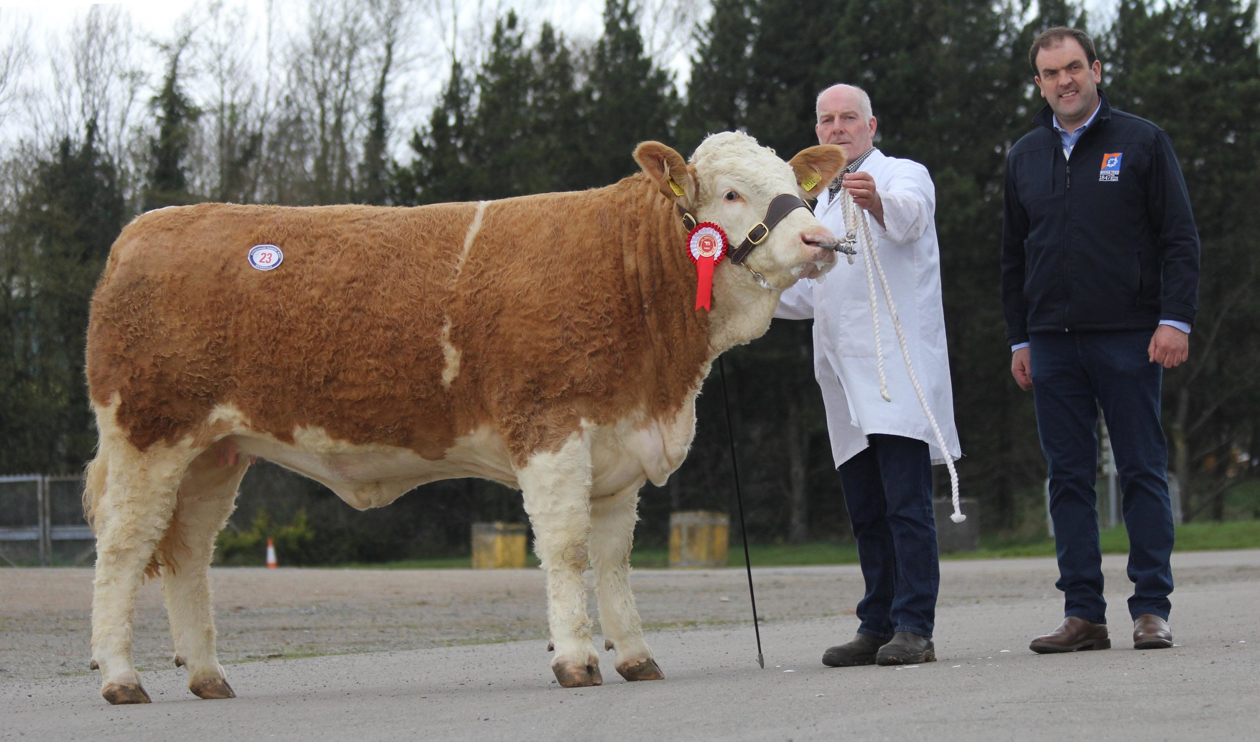 FEMALE CHAMPION, KILBRIDE FARM EUNICE 237I