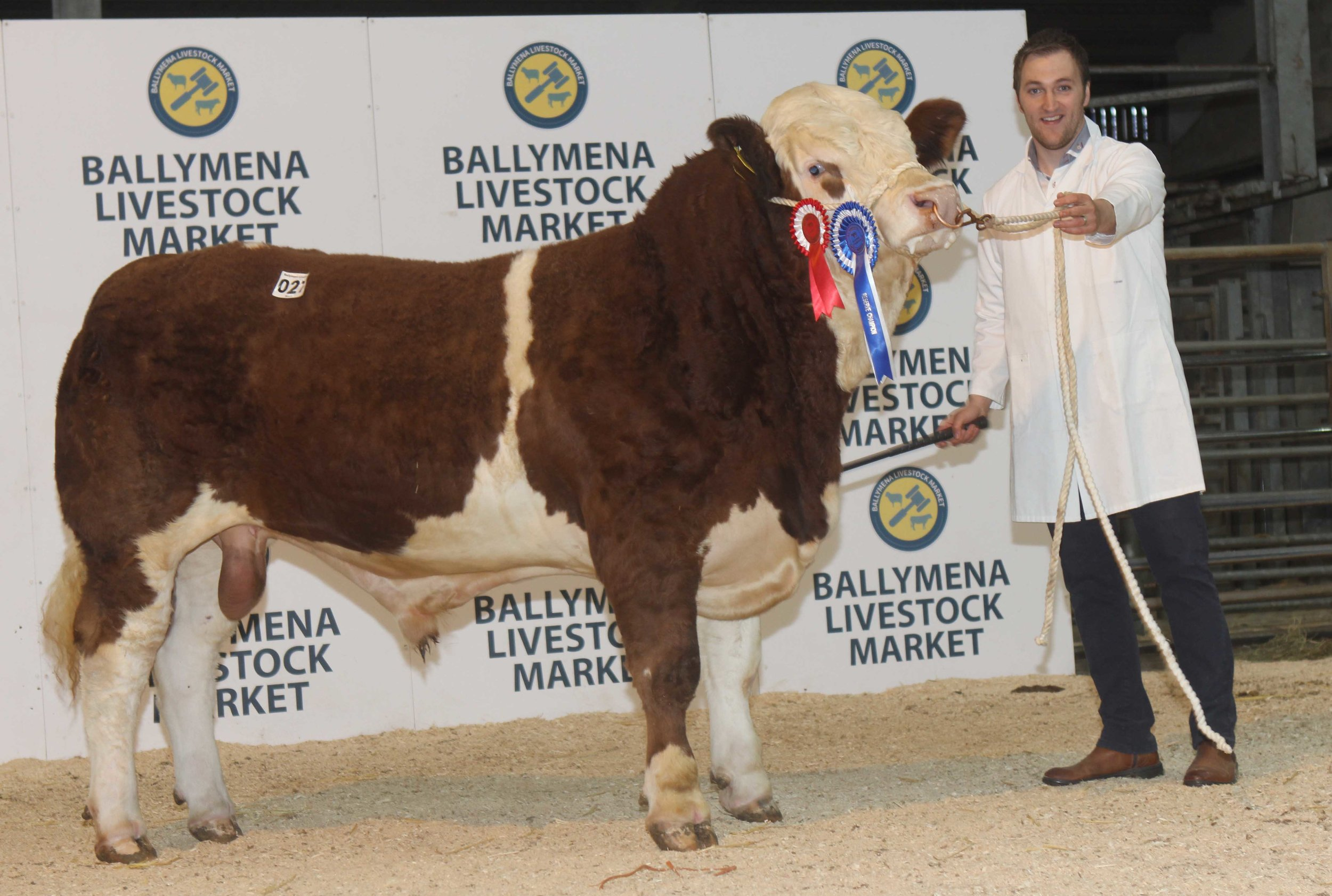 Paul Reaney, Markethill, exhibited the reserve champion Cladymore Justice sold for 2,700gns at the NI Simmental Club's Ballymena show and sale.