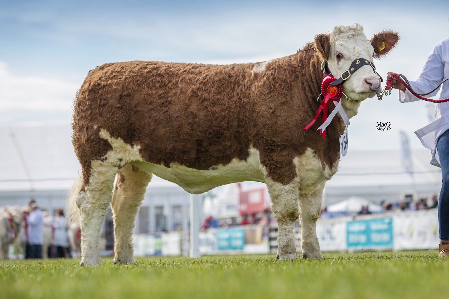 Reserve Junior and Reserve Female Champion was Cleenagh Jessica from first-time Balmoral exhibitor Julie Stinson, Enniskillen. Picture: MacGregor Photography