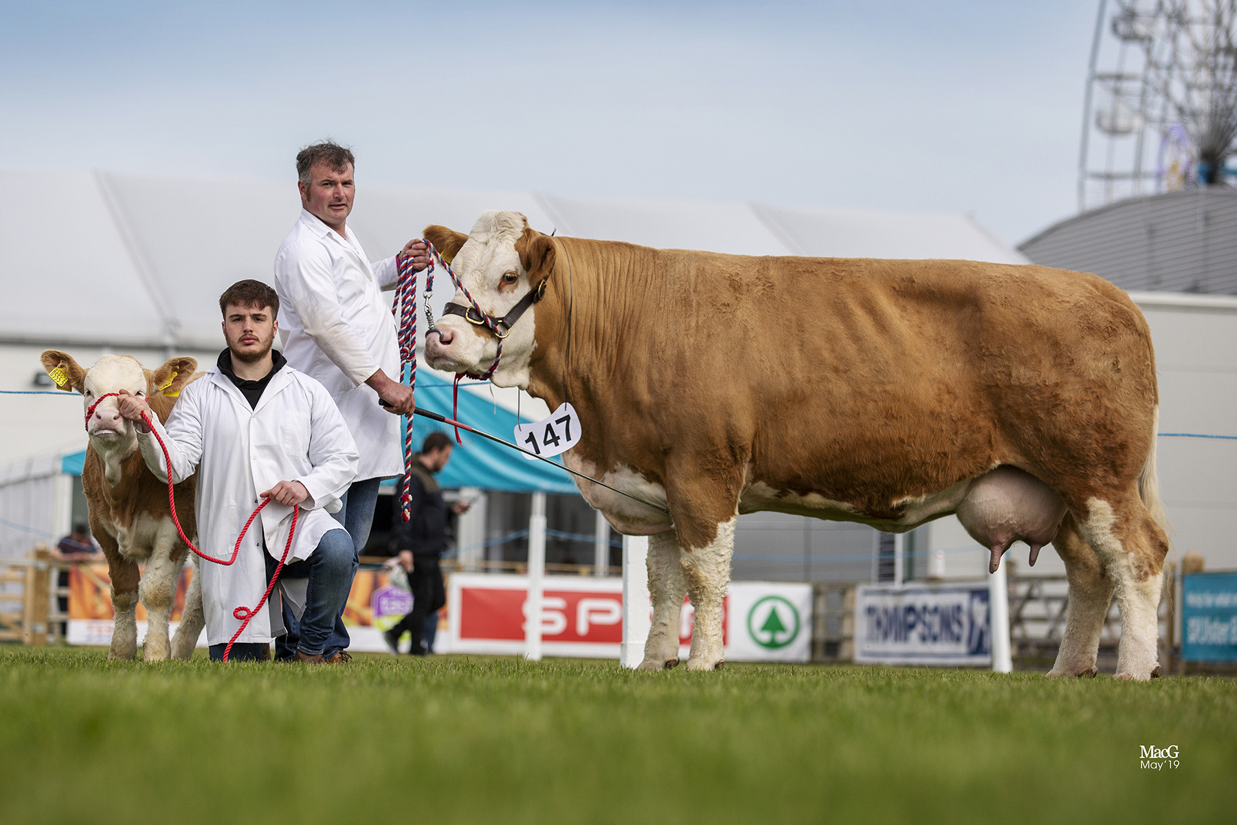 Ballinalare Farm Chanel owned by Joe Wilson, Rathfriland, was the winner of the Senior Cow Class. Picture: MacGregor Photography