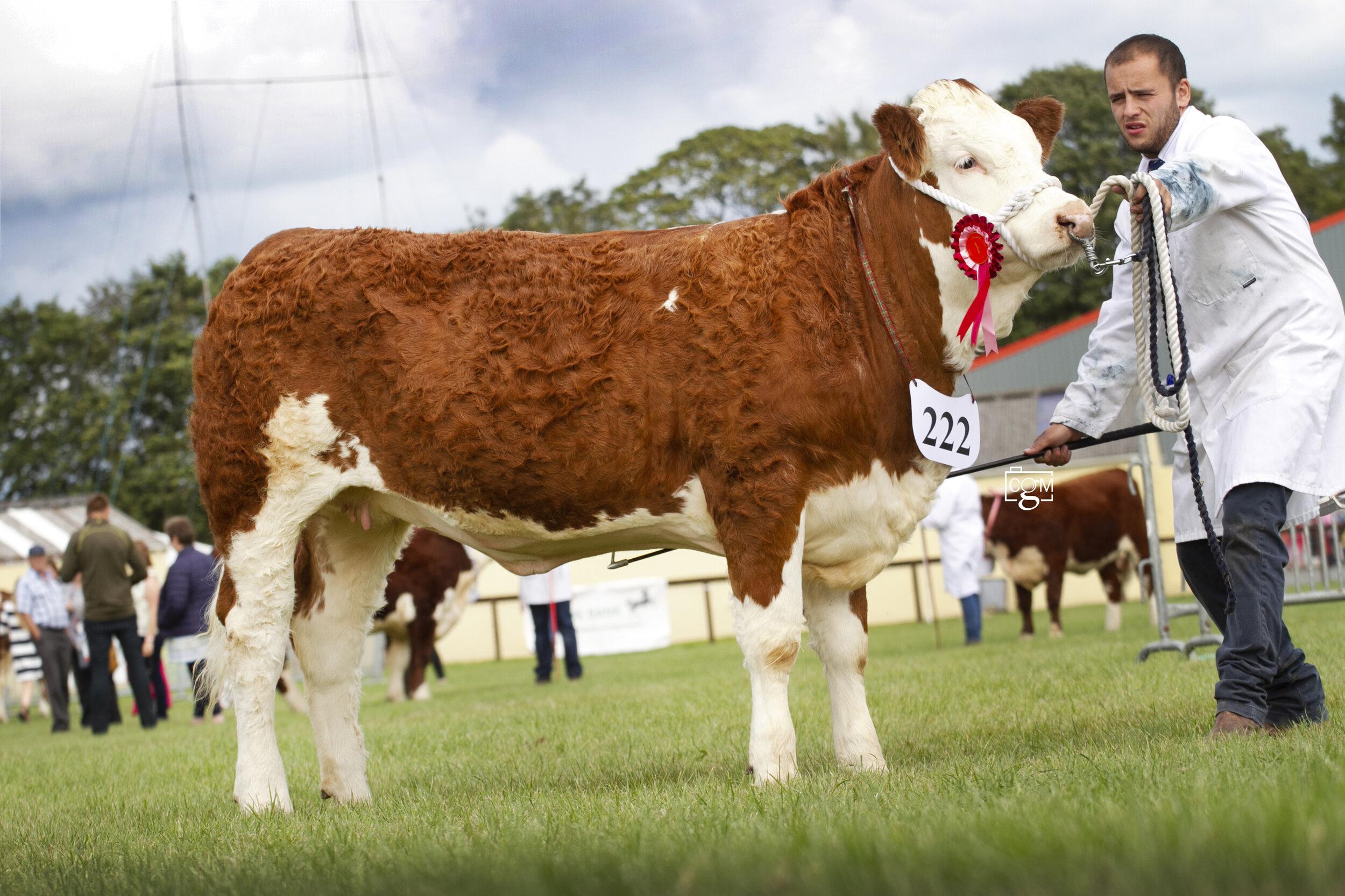 Heifer-Calf-7128.jpg