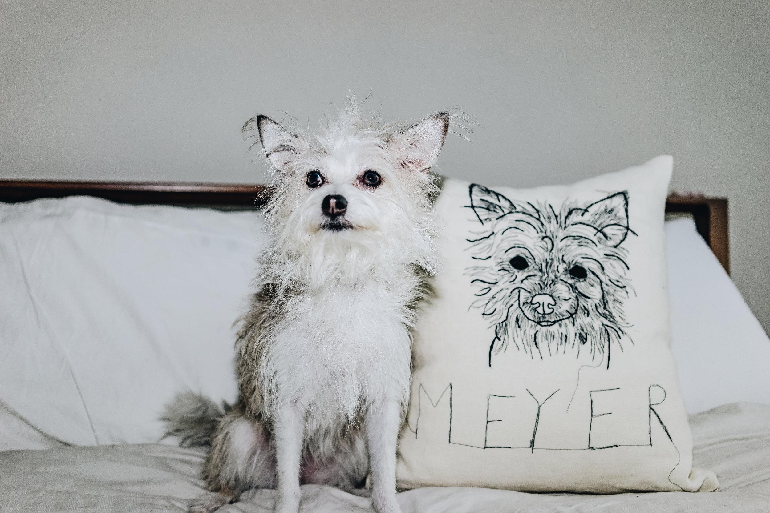 meyer and pillow 2.jpg