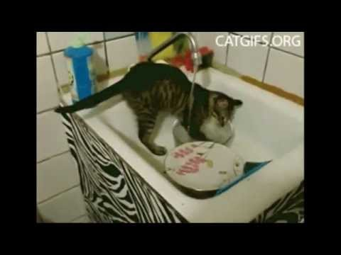 Funny House Cleaning Pets