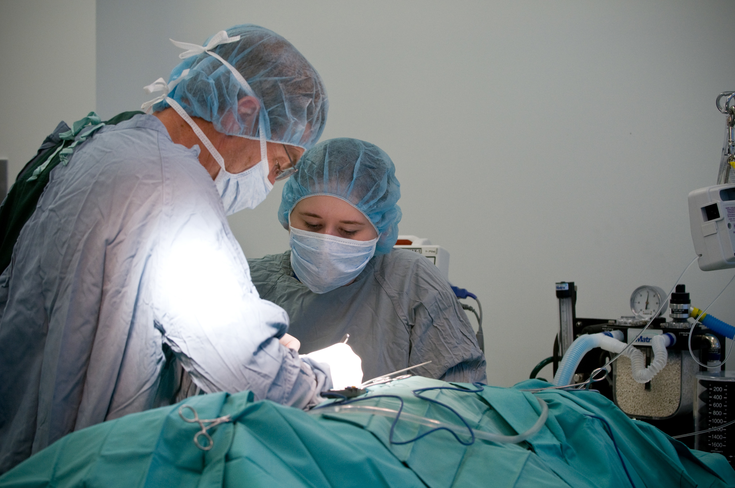Surgery begins. Sterile drapes are used to establish a sterile field that minimizes contamination. The surgical suite has access to sterile supplies, sterilizing devices, fluid and blanket warmers, and other equipment.