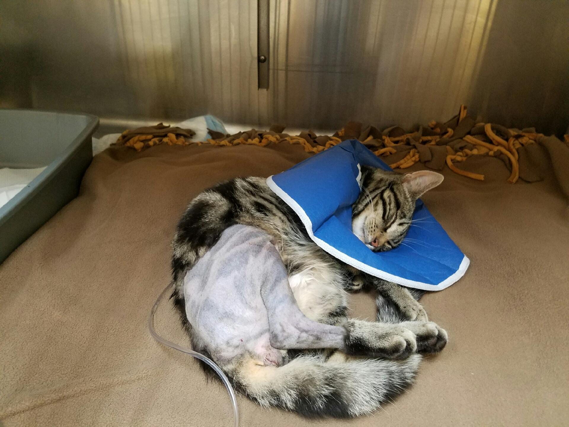 VMC Blog — Veterinary Medical Center of CNY