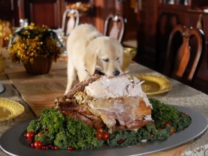 thanksgiving-dog-dinner-dogvacay-300x225