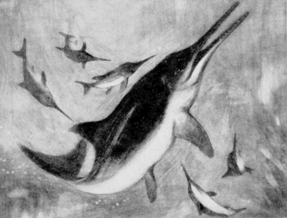 EB1911_Palaeontology_-_ichthyosaur_with_young_-_restoration.jpg