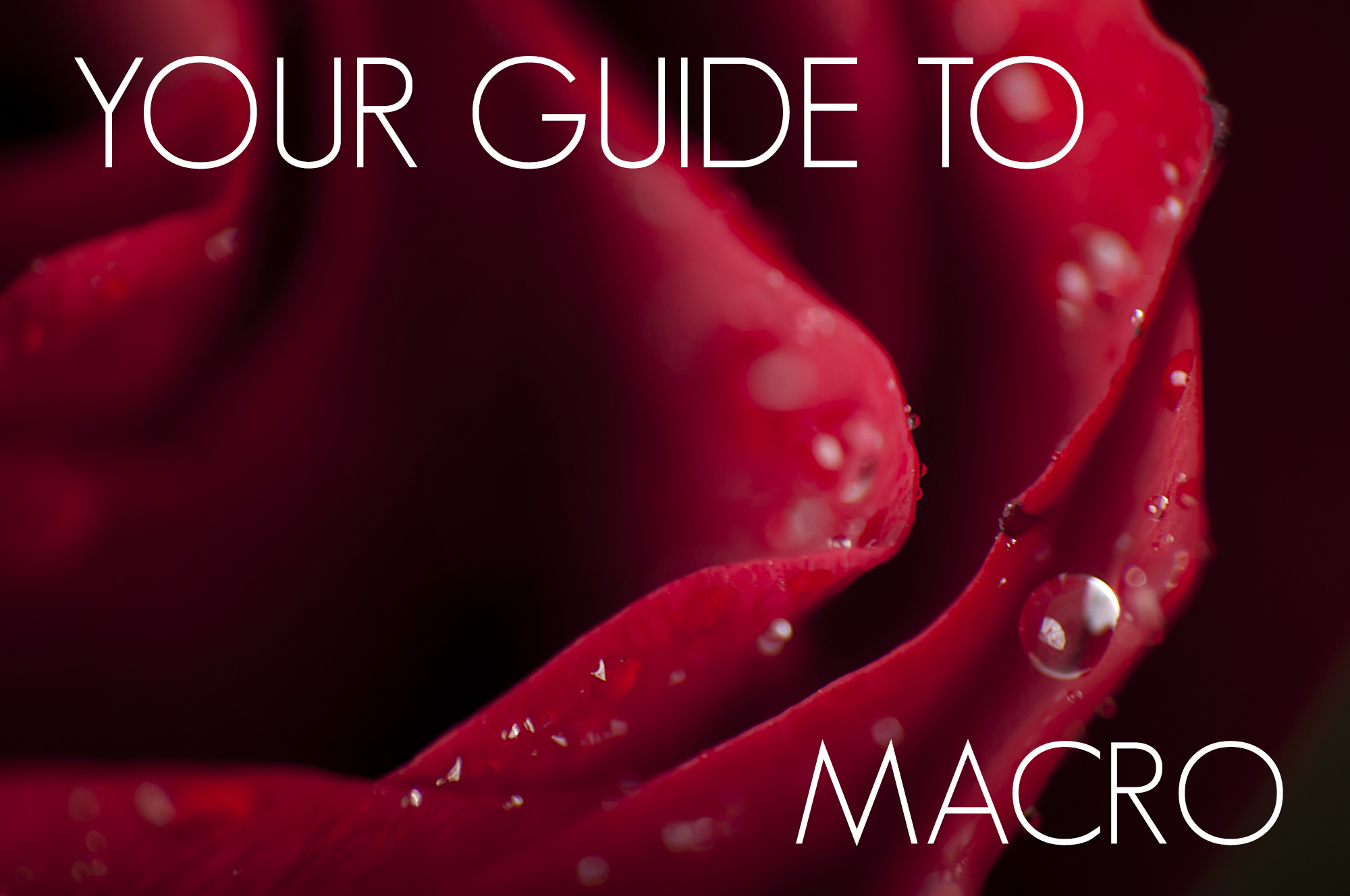 Your guide to macro