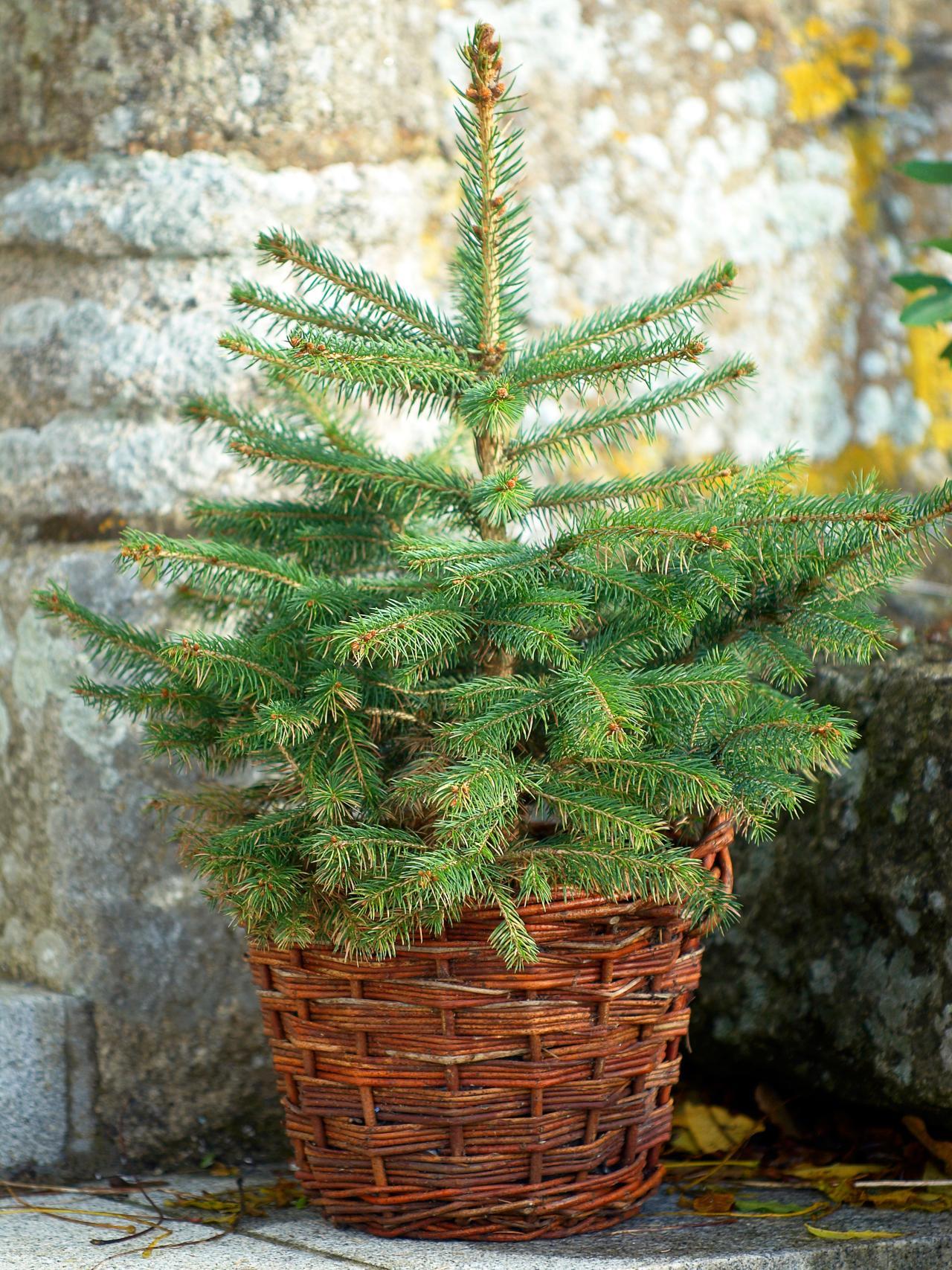 Smallchristmastree.jpeg