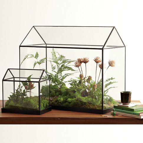 best-25-small-glass-greenhouse-ideas-on-pinterest-small-indoor-greenhouse.jpg
