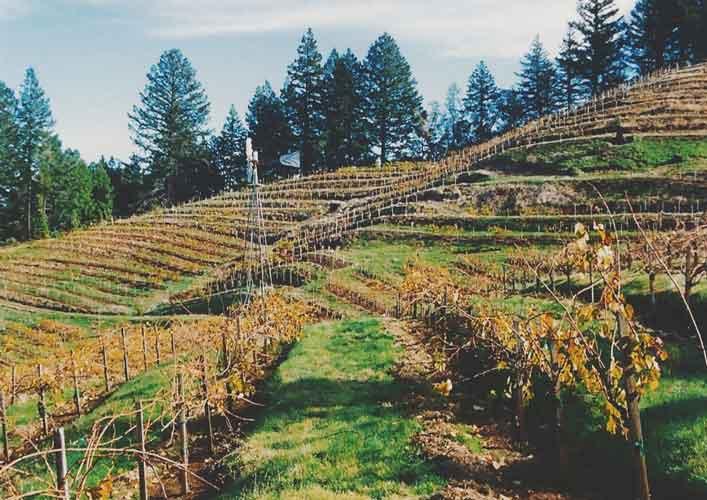 Wing-Canyon-Vineyard-2-500.jpg
