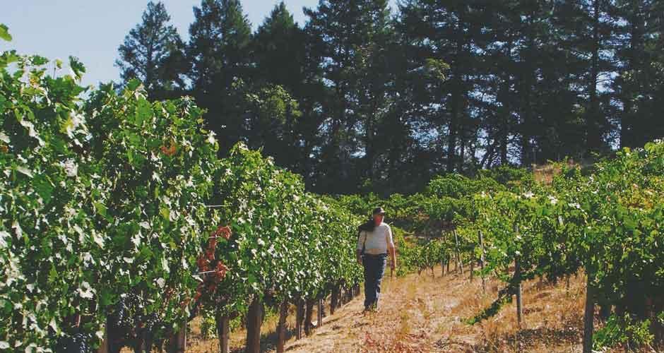 Bill-vineyard-500.jpg