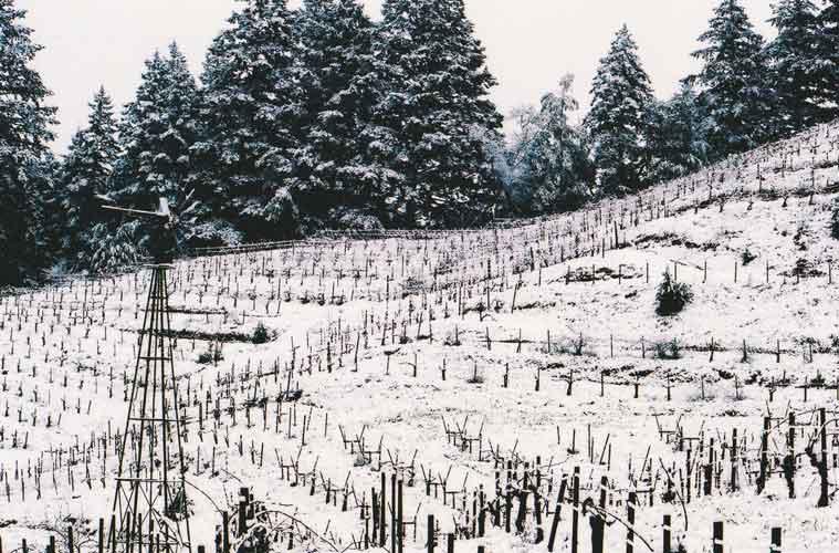 Wing-Canyon-Vin-Winter-vines-500.jpg