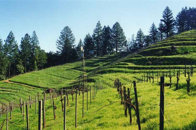 Wing-Canyon-Vin-Spring-vines-500.jpg