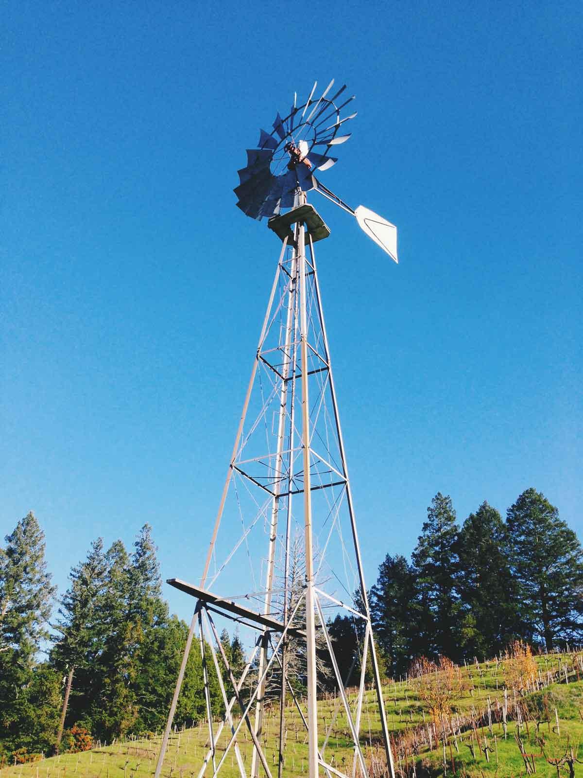 Windmill-web.jpg