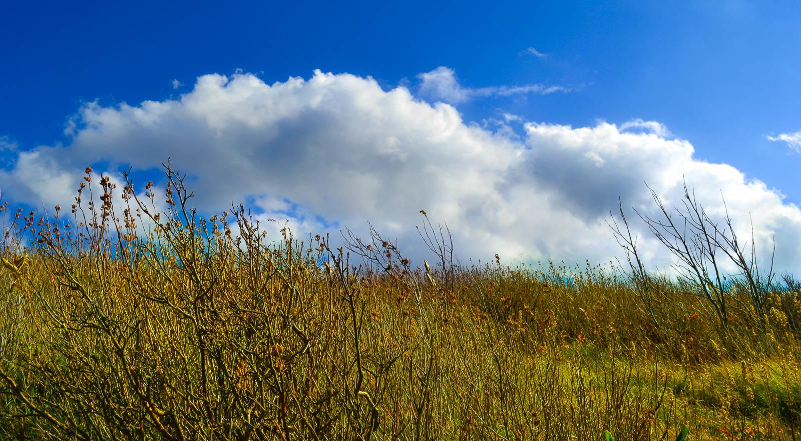 Black Balsam Meadow