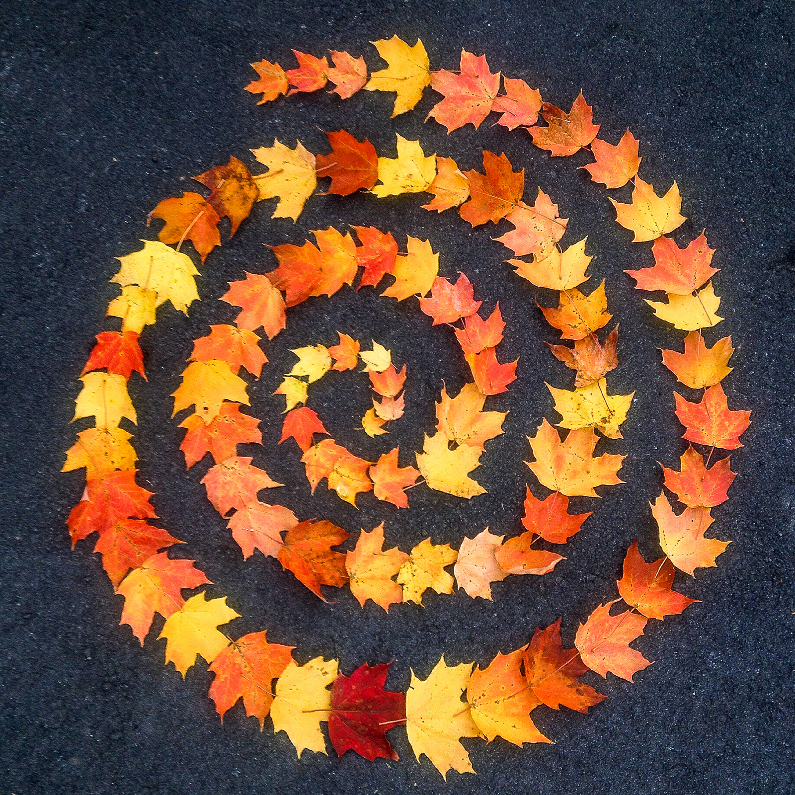 Fall Sprial