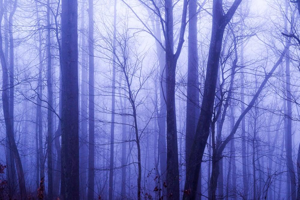 Mystic Mountain Fog