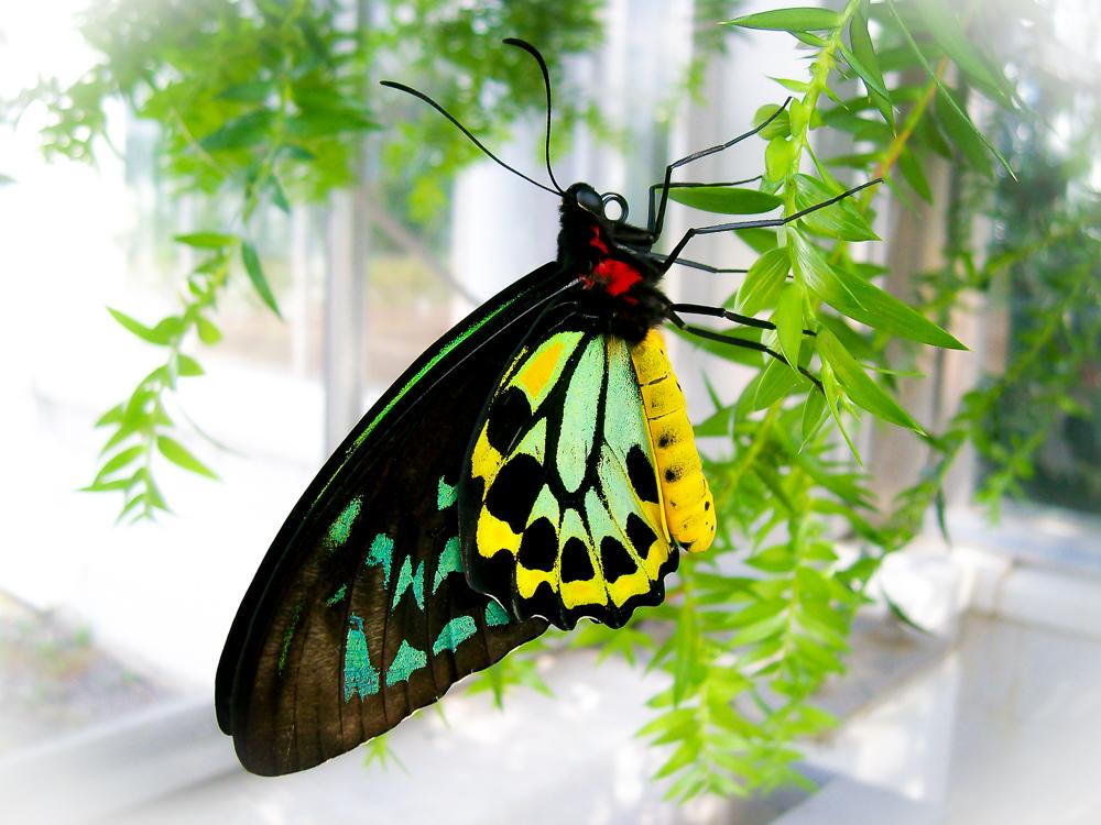 Lepidoptra Extraordinaire