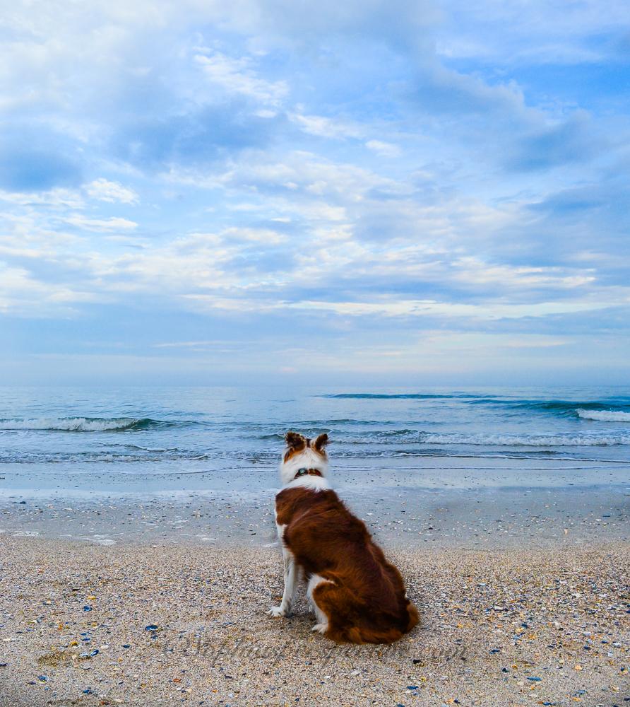 kk beach 3 fbDSC_0011.jpg